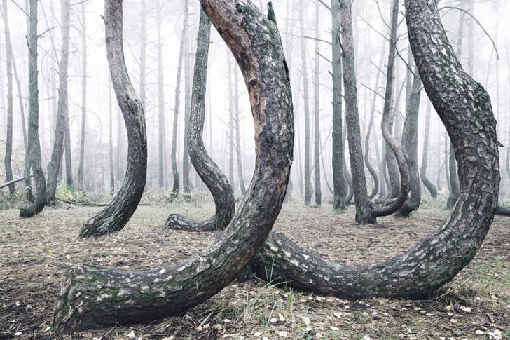 crooked-forest-krzywy-las-kilian-schonberger-poland-7jpg-728x410